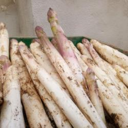 HOERDT | Les premières asperges sortent de terre