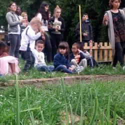INITIATIVE   Des choux &agrave choucroute cultivés... dans une école maternelle de Schiltigheim