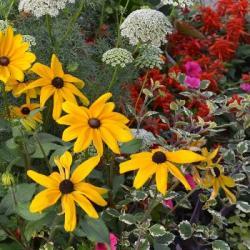 MULHOUSE | Le jardin éphémère de la place de la Réunion prend forme