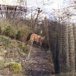 DECOUVERTE   Naissances en série au zoo de Mulhouse depuis plusieurs mois