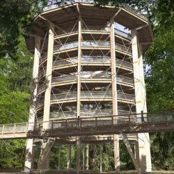 """TOURISME   Le """"Chemin des Cimes"""" prend forme sur les hauteurs de Drachenbronn (67)"""